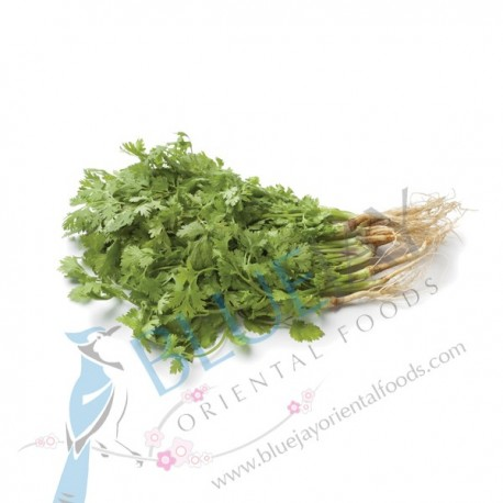 Coriander with Root