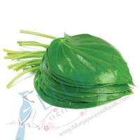 Betel Leaf kg