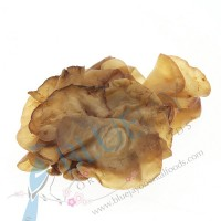Jelly Mushroom