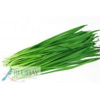 Chive Leaf