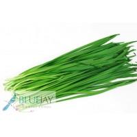 Chive Leaf kg