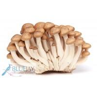 Shimeji Mushroom Brown Kg