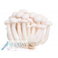 White Shimeji Mushroom Kg