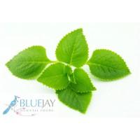 Cumin Leaf Kg