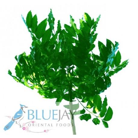 Sadao Leaf Kg