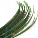Pandan Leaf kg