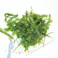 Tamarind Leaf