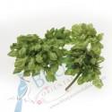 Cowslip Flower (Dok Kajon) kg